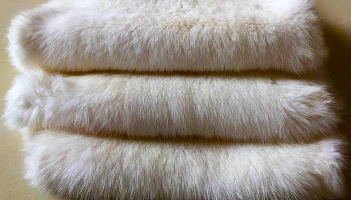 Белый мех кролика пожелтел