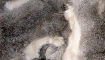 Как почистить шубу или меховой воротник из кролика от жира и желтизны
